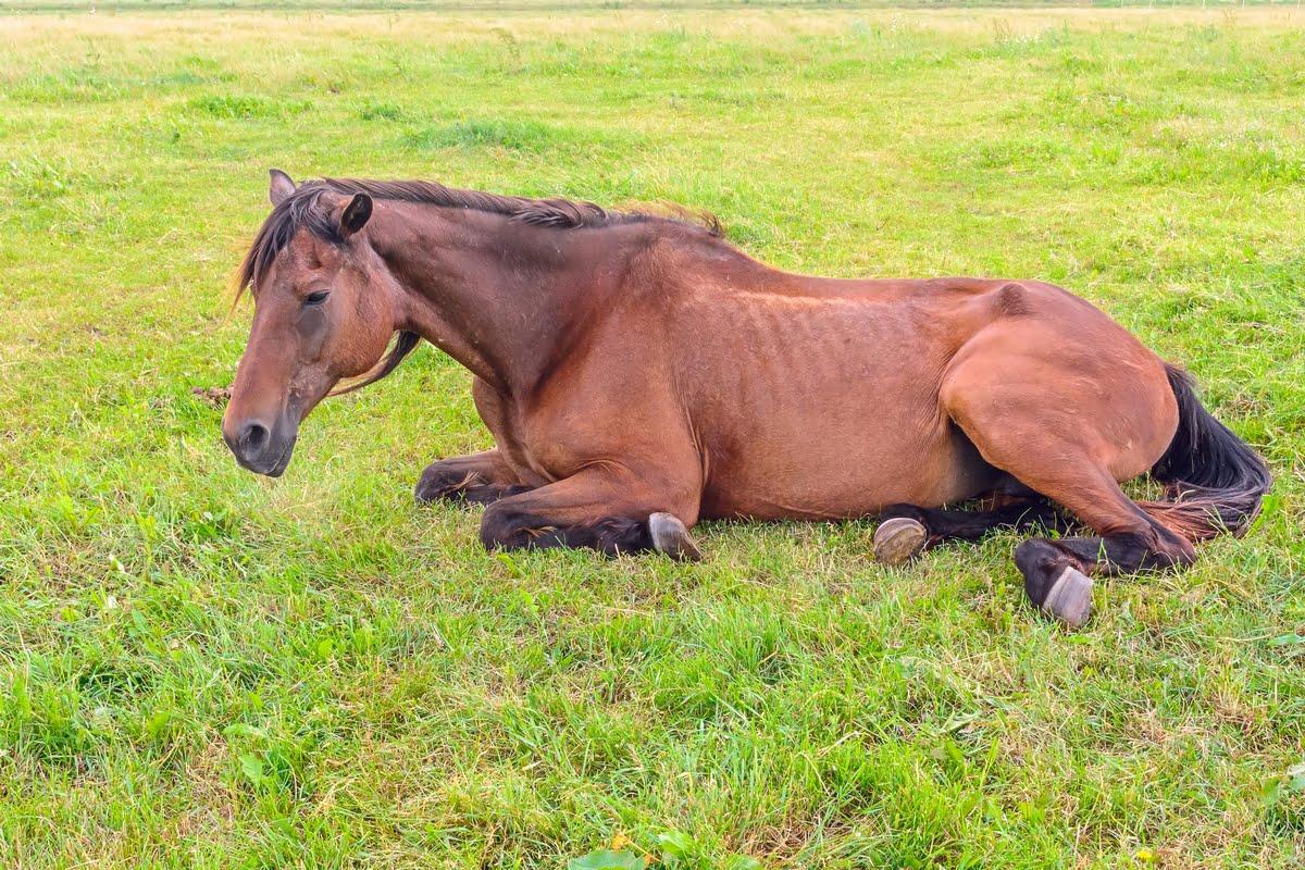 A caval donato non si guarda in bocca - Significato - Esempi