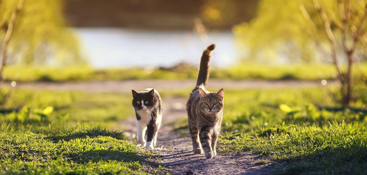 barzellette i due gatti
